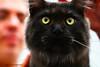 IMG_7609a_c (JANY FEDERICO GIOVANNINETTI) Tags: hairy cats cat hair eyes funny soft sweet expressions occhi international felini gatto gatti divertenti pelosi pelo dolci pedigree internazionale sguardi espressioni razza soffice soffici