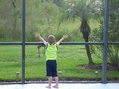 Sandhill Crane. (Puerto De Liverpool.) Tags: trees boy nature birds bigbird orlando florida wildlife cranes villa sandhillcranes wildbirds gruscanadensis villapool