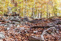 Hilton Area (11-10-16)-015 (nickatkins) Tags: fall fallcolors fallcolor fallfoliage autumn water sun sunlight stream