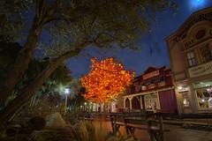 The Halloween Tree (Natalie Bell) Tags: disneyland frontierland halloweentime halloweentree raybradbury orange night lights halloween