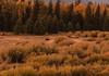 500_1543 (DianeBerky19) Tags: nikond500 sunset summitnatureworkshop 2016 jacksonholewyoming wy moose