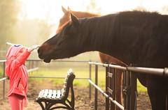 Kontakt (O.I.S.) Tags: pferde pferd horse horses fall autumn herbst fehmarn mdchen girl child kind fhlen feel zuneigung devotion dunst haze