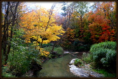 Another walk in the ravine (Rina Pitucci (Tilling 67)) Tags: trees downsviewdells ravine creek autumn toronto