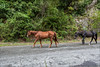 Лошади свободно гуляют по дороге (equinox.net) Tags: 1635mmf4 f71 1400sec 26mm iso800