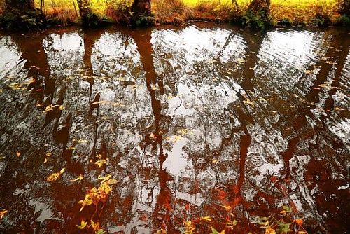 #canal #waterreflection #panasonicg80 #goytre #wharf #pontypool #pontypoolcanal #mamhilad  #amateurphotographermagazine #autumn