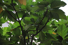 20161106_隨意拍 (BrellLi) Tags: green park trees cpl 台灣 台北市 戶外 樹 foliage branches 葉脈 葉 leaves