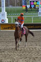 2016-11-06 (46) r3 Horacio Karamanos on #8 Marabea at Laurel Park - winner (JLeeFleenor) Tags: photos photography md marylandhorseracing racing track laurelpark horaciokaramanos jockey   jinete  dokej jocheu  jquei okej kilparatsastaja rennreiter fantino    jokey ngi horses thoroughbreds equine equestrian cheval cavalo cavallo cavall caballo pferd paard perd hevonen hest hestur cal kon konj beygir capall ceffyl cuddy yarraman faras alogo soos kuda uma pfeerd koin    hst     ko  winner