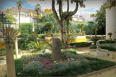 Dans les jardins de la Casa de Pilatos (Maison de Pilate), Sevilla, Andalucia, Espana (claude lina) Tags: claudelina espana spain espagne andalucia andalousie ville town city sevilla sville garden casadepilatos maisondepilate