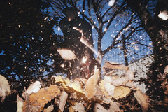 Central Park , NYC , 2016 - IMG_0078 (dirtyharrry) Tags: ny nyc usa us newyork newyorkcity neyorkcity dirty dirtyharrry dirtyharry 5dmkii canon color colour pinhole 35mm flash