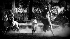 Anderson dos Santos (Eduardo Amorim) Tags: gacho gachos gaucho gauchos cavalos caballos horses chevaux cavalli pferde caballo horse cheval cavallo pferd crioulo criollo crioulos criollos cavalocrioulo cavaloscrioulos caballocriollo caballoscriollos pampa campanha fronteira uruguaiana riograndedosul brsil brasil sudamrica sdamerika suramrica amricadosul southamerica amriquedusud americameridionale amricadelsur americadelsud cavalo         hst hest hevonen  brazil eduardoamorim jineteada gineteada