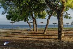 Greek Country (Marios Krokidis) Tags: volos greece landscape sky day trees beach sea seascapes