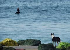 The love dog.- El perro enamorado. (Poldarkk) Tags: dog love summer girl surfer surf anglet arte art colour aquitaine france irun