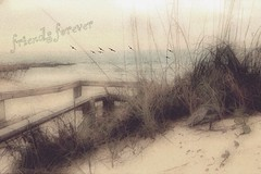 Friends forever (Beaches Marley.....offline a lot) Tags: pawleys island sc dunes ipad