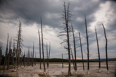 Death Trees (GlobalGoebel) Tags: canonef24105mmf4lisusm canoneos5dmarkiii 24105mm trees dead yellowstone national park death apocalyptic midway geyser basin wyoming armageddon clouds cloudy desolation desolate dying
