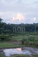 H504_3573 (bandashing) Tags: sunset water field clouds sky green trees teagarden sylhet manchester england bangladesh bandashing aoa akhtarowaisahmed socialdocumentary