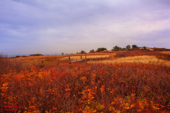 Where Lost Souls Wander.... (Donna St.Pierre) Tags: sakonnet rhodeisland nature landscapes landscape beachscenes autumn winter outdoors hiking weather cool dry cloudy field outdoor sky
