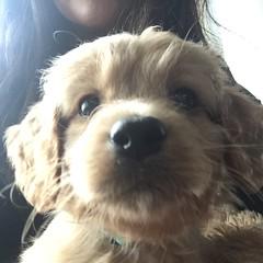 Liesel's little Sugar Bear!