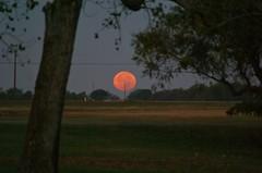 DSC00475 (carrie_20001jf) Tags: supermoon moon morning night astronomy texas sky texassky supermoon2016 2016 skyporn nature texasnature