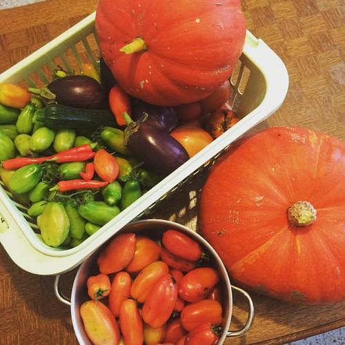 Dernière récolte de L année, on va faire quelques pots, vive la vie au jardin lol #christophetoffolo #photooftheday #vegan #veganfood #instagood #instantsfigés #followme