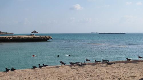 Djibouti 2013 - Ile Moucha