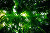 Bamboo Galaxy — a Maccha Milky Way (sunnywinds*) Tags: kyoto arashiyama bamboo pathofbamboo galaxy superelmarm13421asph green 京都 竹 竹林 竹林の小径 みどり 緑 maccha matcha milkyway