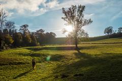 Au soleil dans la prairie (Maxime Bonzi) Tags: france feuille novembre chat couché automne orange poule arbres balade morte violay cheval soleil nature extérieur jaune paysage vache