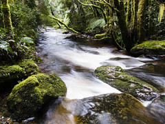 Nelson River (Wanderer and Wonderer) Tags: nelsonriver river creek water rocks moss nature green flowingwater tasmania landscape