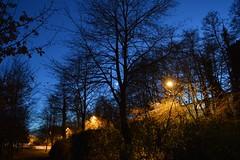 See the moon (feelpenny) Tags: december sussex crawley streetlight tree moon