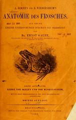 Anatomie des Frosches (jbuddenh) Tags: 1896 anatomiedesfrosches frog