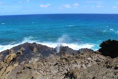 IMG_1285 (michelleingrassia) Tags: halonablowhole blowhole oahu hi hawaii