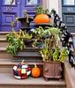 Piet Mondrian Pumpkin ((Jessica)) Tags: pumpkin pietmondrian modernart destijl boston historic massachusetts brownstones newengland southend autumn fall door
