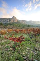 Ocaive, Pedreguer (Jose Francisco Moncho Soler) Tags: pedreguer ocaive lamarinaalta landscape paisaje