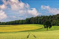 Reinhardshausen 15 (Wolfgang Staudt) Tags: reinhardshausen badreinhardshausen badwildungen kurort nordhessen hessen deutschland natur heilquelle kellerwald landwirtschaft abgelegen wanderung spaziergang urlaubsziel attraktiv