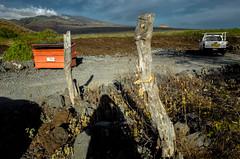 Pat meets mountain (Patricia Colleen) Tags: haleakala maui volcano myshadow lavafields