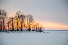 Winter Sunday - Finland (Sami Niemelinen (instagram: santtujns)) Tags: joensuu suomi finland pohjois karjala north carelia talvi winter lumi snow kuhasalo pyhselk lake jrvi