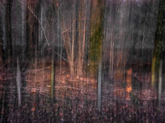 evening walk II (szllva) Tags: icm intentionalcameramovement rougecloitre