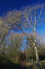 Stanmer Trees, Winter Sun (brightondj - getting the most from a cheap compact) Tags: brightonandhove brighton southdowns southdownsnationalpark stanmerpark stanmer trees sky winter polariser