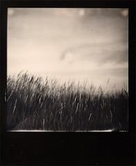 Rm Snderstranden (LucisPictor - www.RetroCamera.de) Tags: bw denmark polaroid 600 impossible