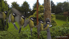 Series-01 (ppg_pelgis) Tags: ireland bird garden tit flight seed feeder landing perch northern greattit omagh