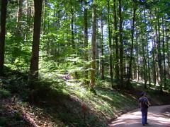 DSCF0830 (JohnSeb) Tags: trees tree forest germany deutschland rboles bosque arbre schwarzwald baum fort badenweiler johnseb bumen eurotour2012