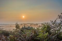 Autumn Morning (nicklucas2) Tags: autumn trees mist misty landscape bracken