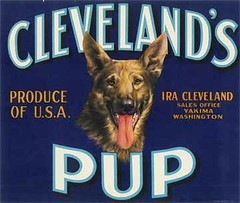 "Clevelands Pup • <a style=""font-size:0.8em;"" href=""http://www.flickr.com/photos/136320455@N08/21460729102/"" target=""_blank"">View on Flickr</a>"