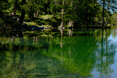Lai da Palpuogna im Parc Ela (balu51) Tags: ausflug spaziergang see bergsee bume wasser spiegelung grn stroll lake mountainlake green emeraldgreen water reflections tree switzerland grisons graubnden bergn laipalpuogna herbst september 2016 copyrightbybalu51