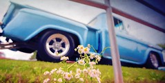 Roadside Beauties... (Wes Iversen) Tags: autofest frankenmuth htt happytruckthursday michigan tokina1116mmf28 blooms blossoms fences flowers painterly pickups trucks