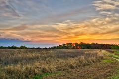 294/366 - Morning Light (Ravi_Shah) Tags: nj cy365 potd nature sony a6000 landscape sunrise field