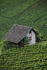 House in the Vines at the Fall (jakoboberle) Tags: house haus vines reben fall herbst summer sommer sun day sonne tag green landscape landschaft nature natur germany deutschland german deutsch