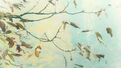 (bobbat) Tags: fog tree autumn leaves pale pastel branch dry