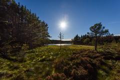 Uath Lochan (Bears Paw) (Nick_Rowland) Tags: highlands scotland uathlochens bearspaw kincraig lochs bluesky trees cairngorms