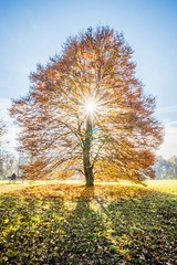 Golden Autumn Tree (Nitroklaus) Tags: tree autumn golden relax calm pasinger stadtpark orange green blue sun star nature herbst laub baum sonne park münchen
