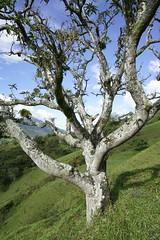 _DSC9737 (nonesmanneslond) Tags: finca barbosa colombia antioquia medellin farm farmlife